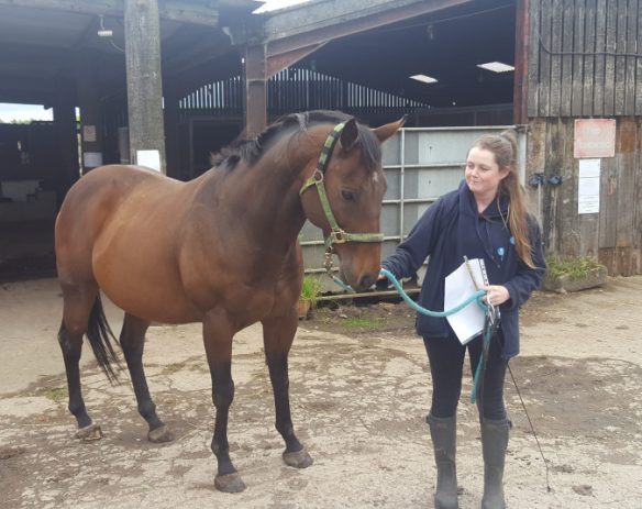 Olly Is Home Heels To Horses
