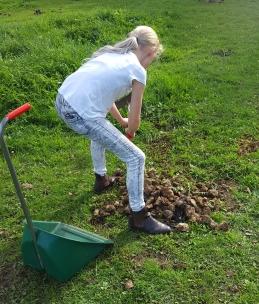 Poo Picking